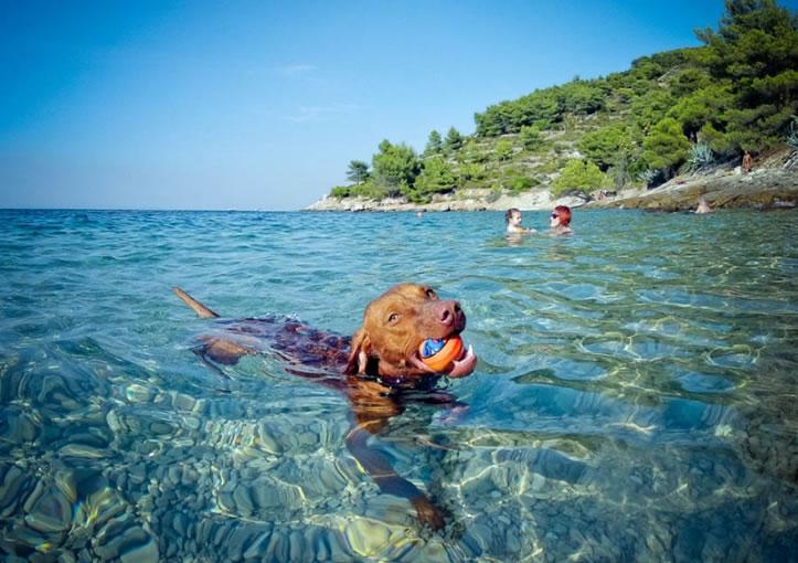 pet friendly vile i hoteli u Grčkoj koji primaju manje kućne ljubimce